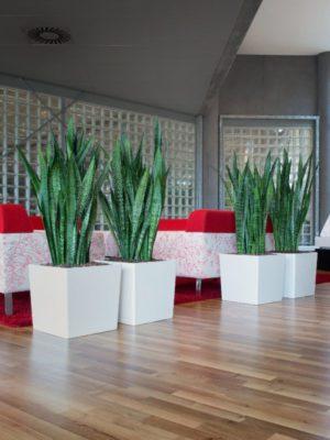 Bac à plantes carré Phoenix